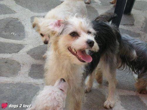Kromfohrländer Lucy  Hundemama mit Welpen  Rasse: Kromfohrländer / Name: Lucy     Mehr lesen: http://d2l.in/3c  dogs2love - Gassi gehen zum Verlieben. Partnerbörse für alle, die Hunde lieben.  Bild, Dating, Foto, Hund, Single