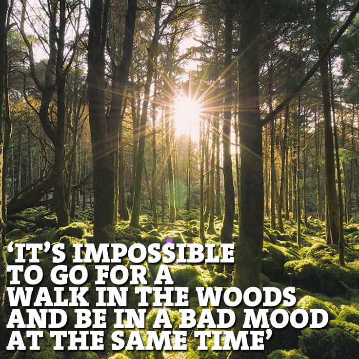 """""""It's impossible to go for a walk in the woods and be in a bad mood at the same time"""""""