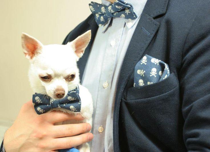 Pozwól zaszaleć swojemu Pupilowi :) Chihuahua Rocks ❤✨ #ek #edytakleist #dodatek #styl #look #boy #men #wedding #dziecko #elegant #muchawwieloryby #handmade #suit #muchasiada #rzeczytezmajadusze #instaman #neckwear #instagood #instaman #finwal #bowtie #bowties #mucha #muchy #prezent #gift #instalike #marynarskistyl #naprezent #prezent #handmade #rekodzielo