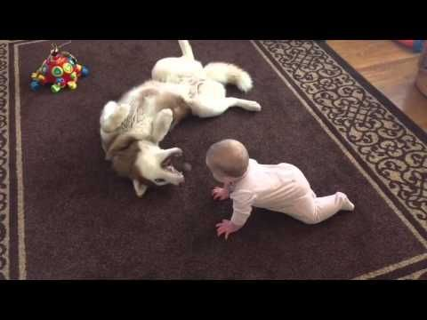 Baby Cozies Up To Husky. When I See The Dog's Reaction I Have To Hit 'Replay' | SF Globe