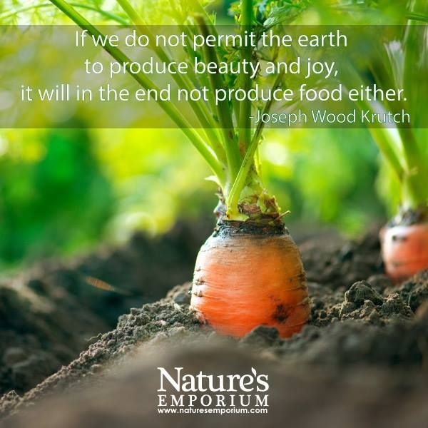 If we do not permit the earth to produce beauty and joy, it will in the end not produce food either. - Joseph Wood Krutch - Nature's Emporium