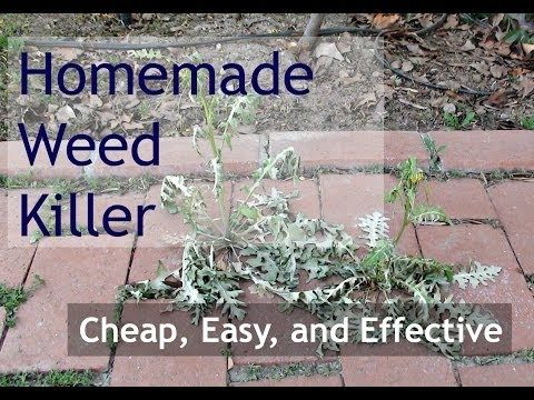 Homemade Weed Killer (Natural Weed Killer - Alternative to Roundup) - YouTube