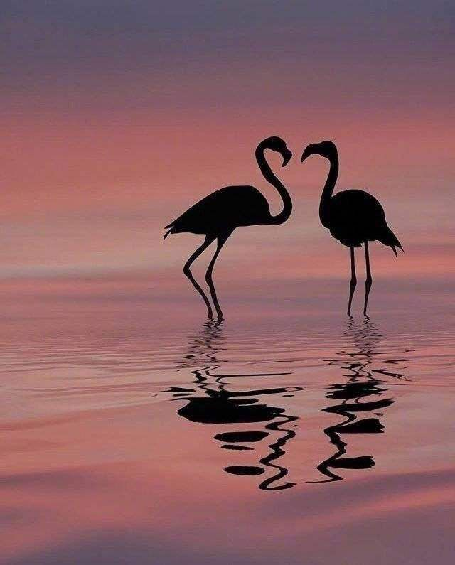 Aesthetic Sharer Zhr On In 2020 Flamingo Pictures Wild Animals
