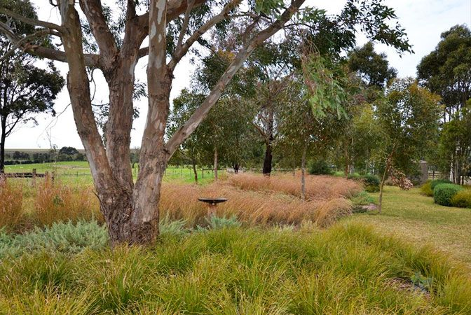 Lashings of native Australian grasses