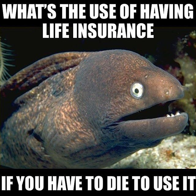 Wasted Life Insurance One Liner Jokes Corny Jokes Bad Jokes