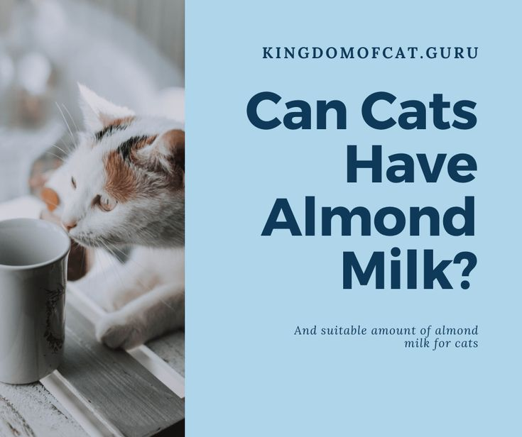 Can Cats Have Almond Milk? trong 2020