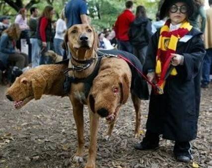 Expecto, kooky costume!
