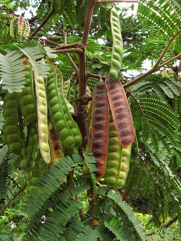 639 best Seed Pods images on Pinterest Seeds Plants and