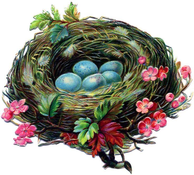 Картинки для детей гнездо на прозрачном фоне