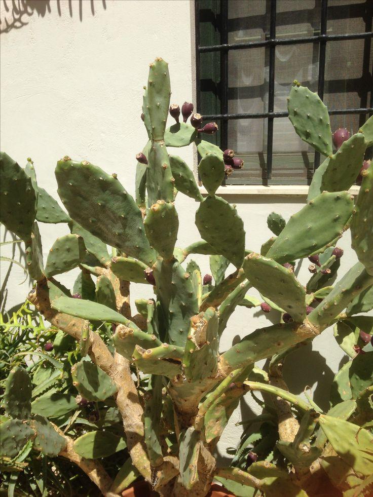Cactus Garden, Chania, Crete, April 2016
