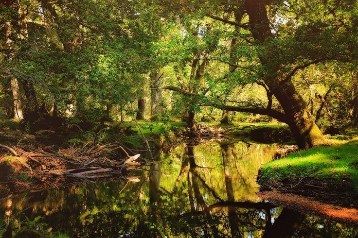 The New Forest National Park, Hampshire, England. Национальный парк Новый Лес, графство Хэмпшир, Англия.