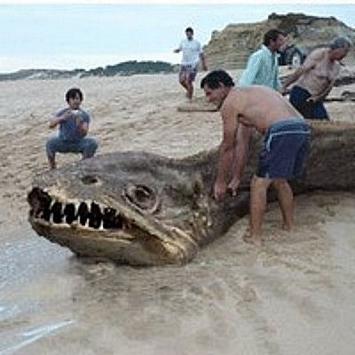 """COVERT SCIENCE-Eight beachcombers found a monstrous carcass washed ashore near Palermo, Italy, July 2,1989. """"It was at least 100ft long, snake-like, & had a huge head & a wide mouth full of vicious, needle-like teeth."""" Excitement turned sour when """"military types showed up, confiscated our cameras & made us leave."""" Later, no trace of it could be found, & nothing appeared in the media. This pic is the only apparent survivor. """"Passing Strange-1910-2013"""""""