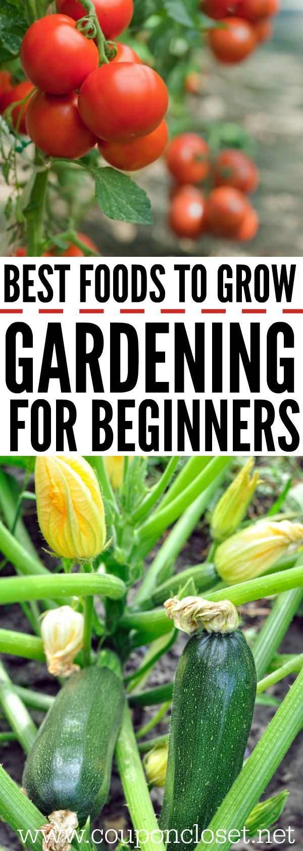 gardening for beginners best foods to grow first