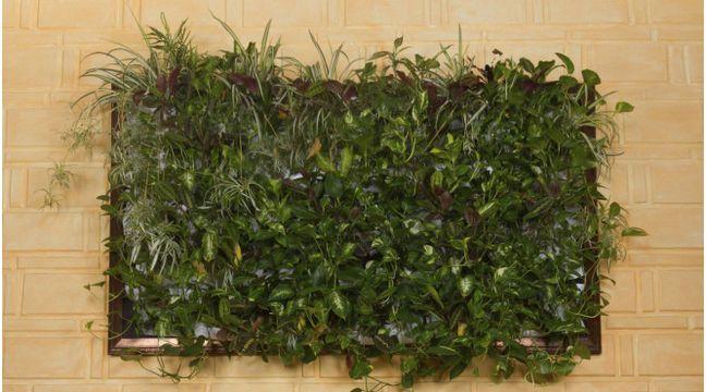 die besten 25 vertikales pflanzen ideen auf pinterest wandg rten makramee pflanzenhalterung. Black Bedroom Furniture Sets. Home Design Ideas