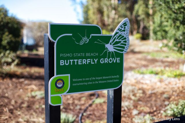 Monarch Butterfly Grove | Pismo Beach, CA. 30k+ butterflies here . Simply beautiful.