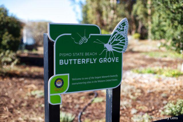 Monarch Butterfly Grove   Pismo Beach, CA. 30k+  butterflies here . Simply beautiful.