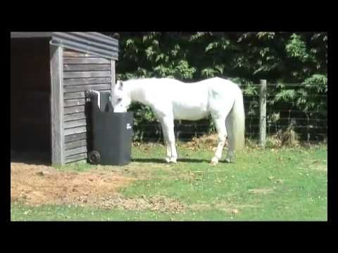 slow feeders of horse a zenyatta variation feeding theme man here length the and nice twine handy have cut this barrel time tips is wise sort you feeder in ornaments if baling then half used hay