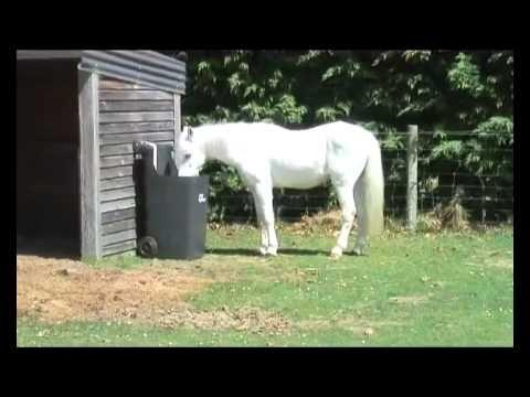 feeder horses hoof horse pin page horsecity hay slow feeders forums