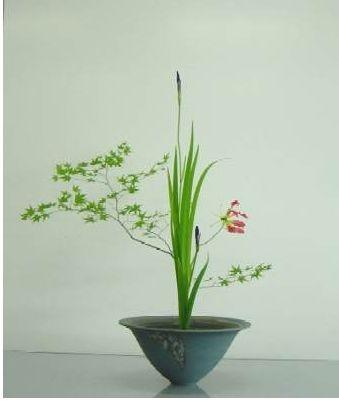 Ikebana, classic iris and jap maple combo + gloriosus