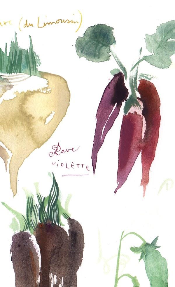Kitchen art Antique vegetables illustration 8X10 print Watercolor food poster Botanical painting. $25.00, via Etsy.