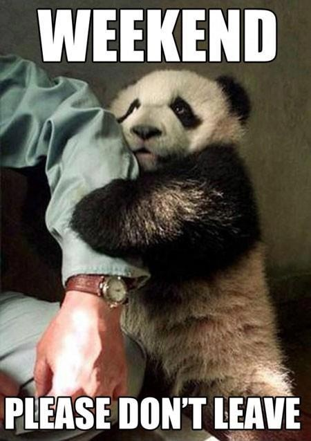 2f21636b7d3931e7226d76fd78cc08b8 baby pandas panda babies 105 best ☆ weekend images on pinterest hello weekend, happy,Are You Free This Weekend Meme