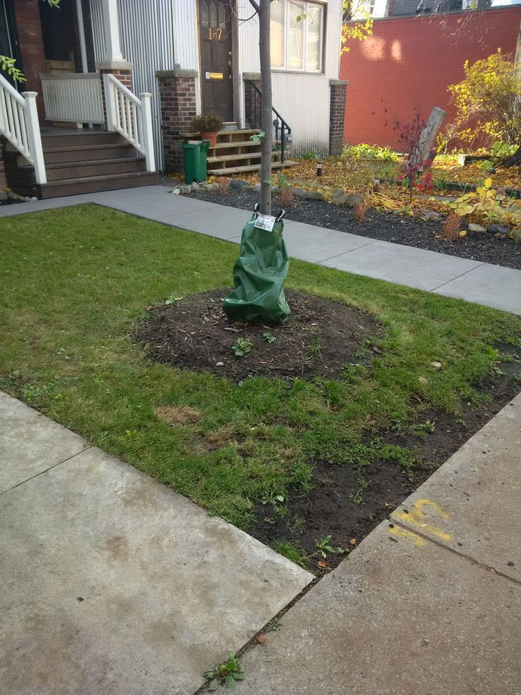 Leaf clean-up, rake & bag, lawncut, overseeding, fertilizer, organicgreenlawncare@hotmail.com