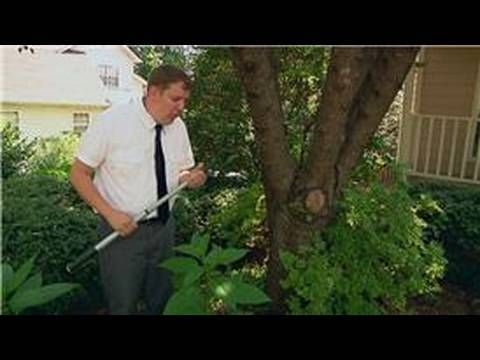 how to get rid of ants on trees and plants