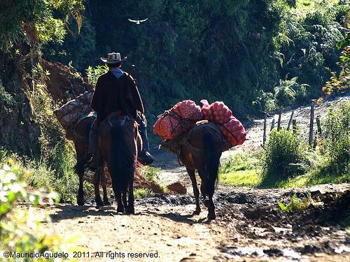 Campesino Antioqueño, Colombia