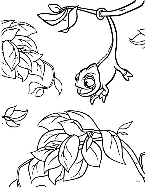 coloring pages tangled pascal 1 - Chameleon Coloring Pages Print