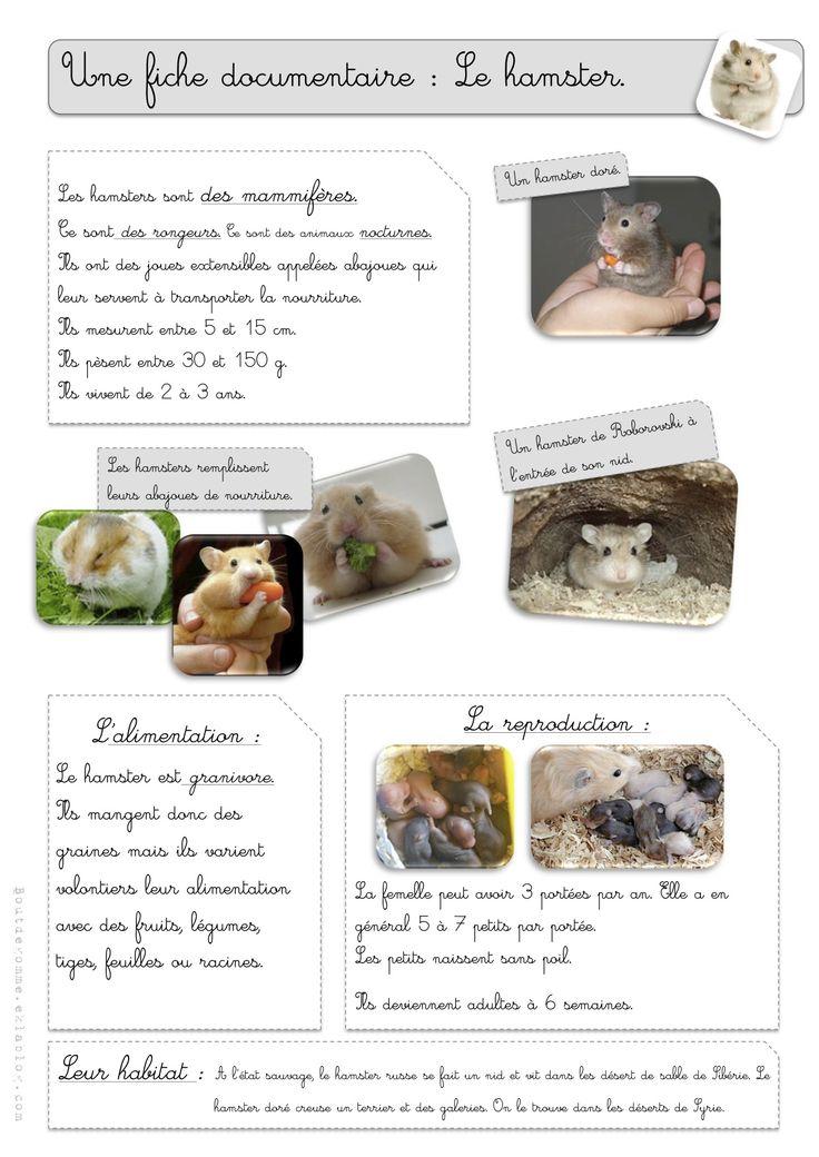 Le hamster - Bout de gomme
