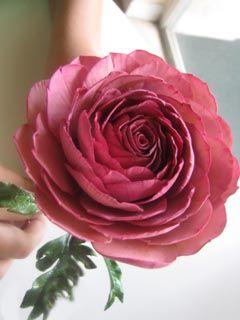 Sugar Flowers-gumpaste-gum paste-gum paste flowers-gum pastes flower-ranunculu-ranunculus-gum paste ranunculu-gum paste ranunculus-anemone-gum paste anemone-sugar anemone