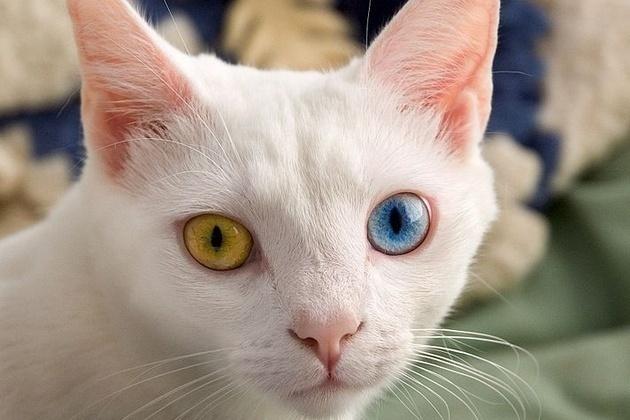 Sunt pisicile spioni extratereştri? | VICE Romania