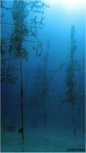 Les impacts de l'acidification des océans sur les récifs coralliens