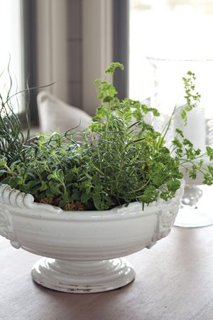 Edible Plants U0026 Herbs Planted In An Old Rescued Tureen Or Container.
