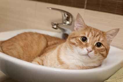Come curare il pelo e le unghie del gatto? Istruzioni per l'uso Oggi vediamo come curare il pelo del gatto sia lungo che corto e tagliare le sue unghie senza rischiare di fargli male. Soprattutto nei gatti a pelo lungo è opportuno effettuare frequenti spazzolate #gatto #pelo #unghie