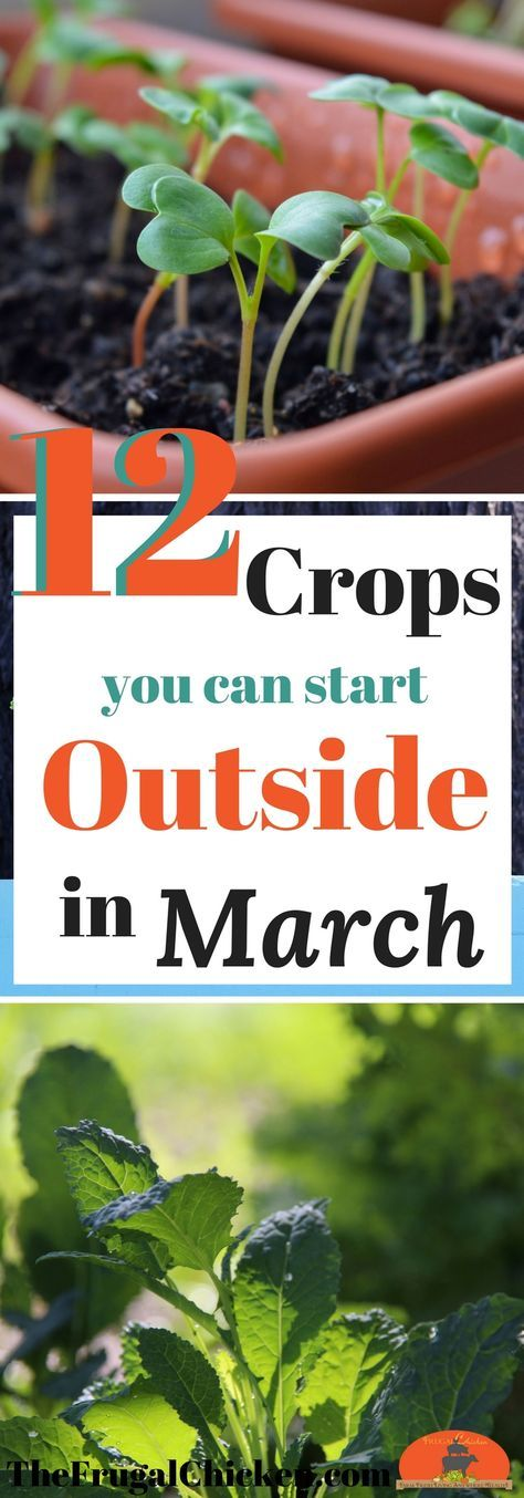Itching to get started on your spring garden? There ARE some crops you can start growing outside in March. Here's 12 to get you started!