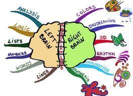 Understanding the brain  www.moorekidsbooks.com