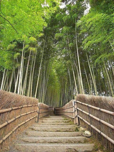 Wow ! Magnifique ! 💚😊  Forêt de bambou au Japon