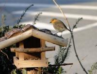 Wenn die ersten Schneeflocken übers Land treiben, bricht für viele Wildvögel eine harte Zeit an. Bild:  ZZF/Turk