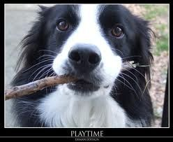 ...this is my stick...isn't it pretty? Now THROW IT!