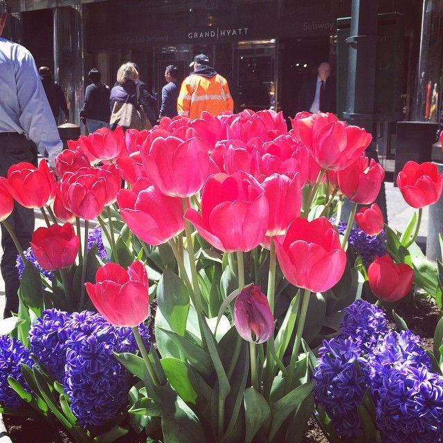 116 best Floral Inspiration images on Pinterest | Wedding places ...