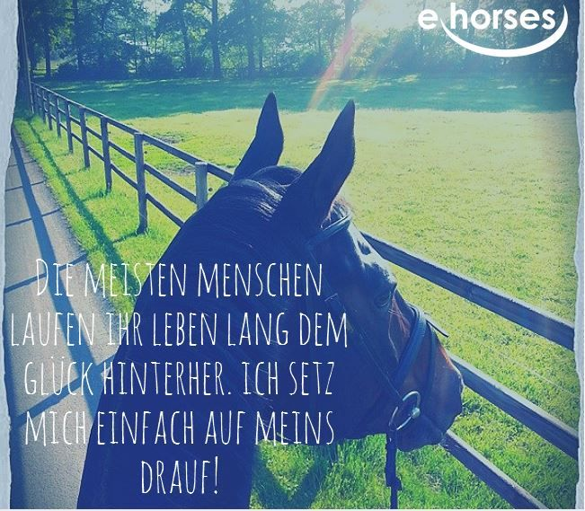 Finde dein Glück auf www.ehorses.de