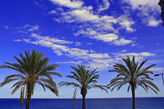 Mil palmeras by Señor L - senorl.blogspot.com.es, via Flickr
