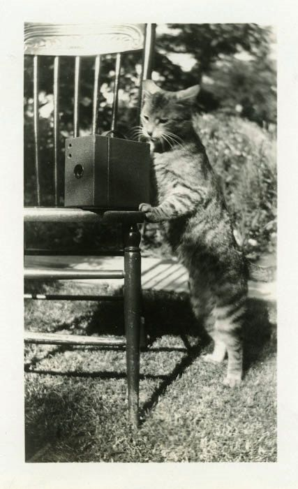 "Vintage Photo ""The Kitty Photographer"" Cat Camera Snapshot Photo Old Photo Black & White Photograph Found Paper Ephemera Vernacular - 152 by DandRPhotos on Etsy https://www.etsy.com/listing/268148964/vintage-photo-the-kitty-photographer-cat"