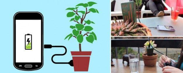 ¡Enchufa tu celular a una planta y cárgalo! | La Bioguía