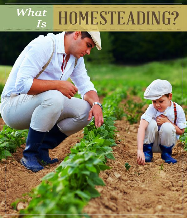Cultivating old-fashioned skills in a modern world learn everything you have to know in homesteading.