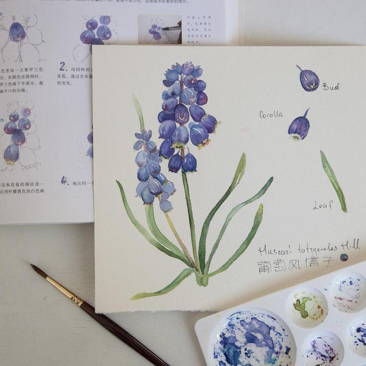 «Садовый цветок мускари, нарисованный по обучающему журналу. Подробные пошаговые фотографии - и ботаническая иллюстрация готова. Журнал с оранжевой лилией…»