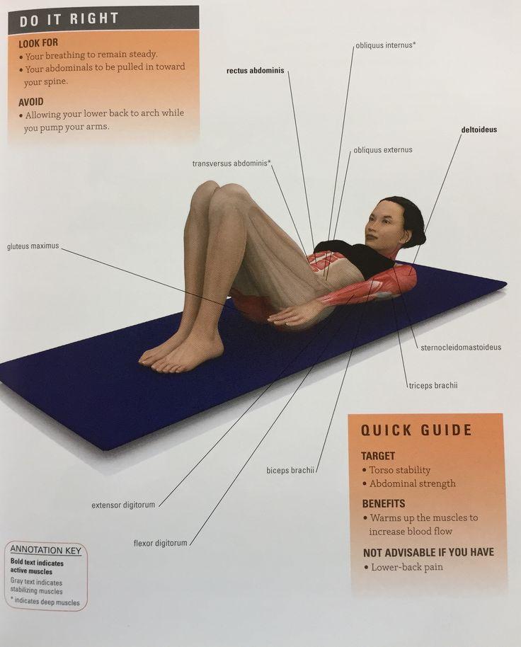 16 best Pilates Anatomy images on Pinterest | Anatomy, Anatomy ...