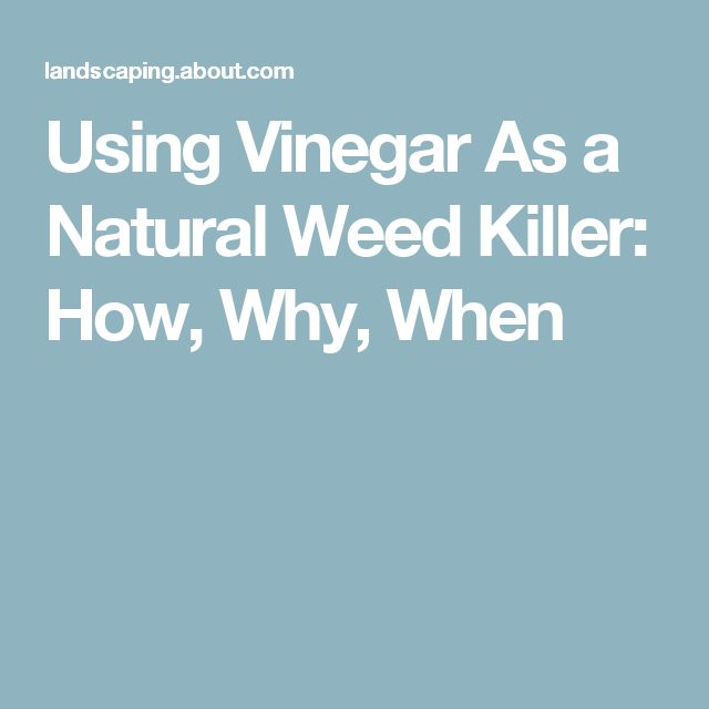 Using Vinegar As a Natural Weed Killer: How, Why, When