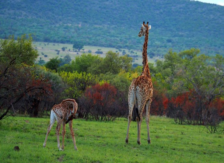 Destinations in South Africa in photogallery
